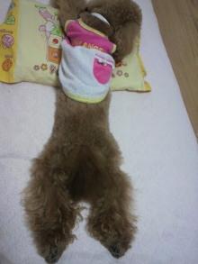 愛犬鈴ちゃん~トイプードル☆ライフスタイル~-2011060723560000.jpg