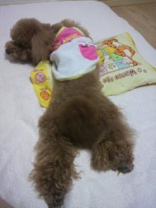 愛犬鈴ちゃん~トイプードル☆ライフスタイル~-2011060723550000.jpg