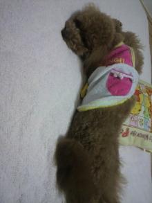 愛犬鈴ちゃん~トイプードル☆ライフスタイル~-2011060723550002.jpg