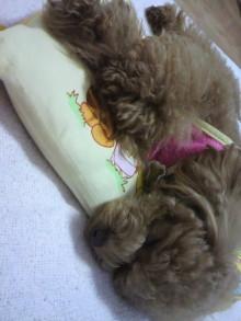 愛犬鈴ちゃん~トイプードル☆ライフスタイル~-2011060723570000.jpg