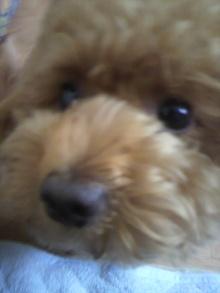 愛犬鈴ちゃん~トイプードル☆ライフスタイル~-2011060814210001.jpg