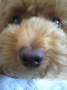 愛犬鈴ちゃん~トイプードル☆ライフスタイル~-2011060814210002.jpg