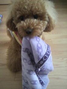 愛犬鈴ちゃん~トイプードル☆ライフスタイル~-2011060814230001.jpg