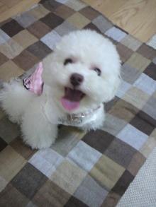 愛犬鈴ちゃん~トイプードル☆ライフスタイル~-2011060911500000.jpg