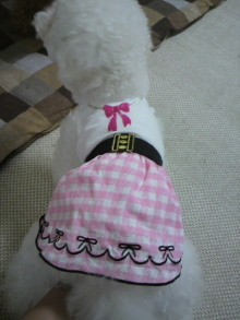 愛犬鈴ちゃん~トイプードル☆ライフスタイル~-2011060911520000.jpg