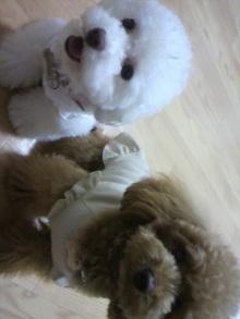 愛犬鈴ちゃん~トイプードル☆ライフスタイル~-2011060917390000.jpg