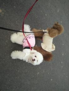 愛犬鈴ちゃん~トイプードル☆ライフスタイル~-2011060917420000.jpg