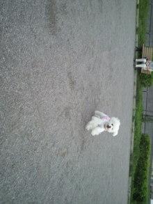 愛犬鈴ちゃん~トイプードル☆ライフスタイル~-2011060917480000.jpg
