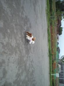 愛犬鈴ちゃん~トイプードル☆ライフスタイル~-2011060917490000.jpg