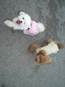 愛犬鈴ちゃん~トイプードル☆ライフスタイル~-2011060917500003.jpg