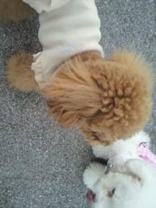愛犬鈴ちゃん~トイプードル☆ライフスタイル~-2011060917520002.jpg