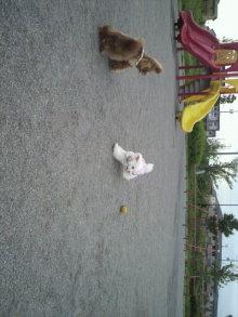 愛犬鈴ちゃん~トイプードル☆ライフスタイル~-2011060917540001.jpg