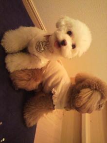 愛犬鈴ちゃん~トイプードル☆ライフスタイル~-2011060918130002.jpg