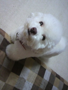 愛犬鈴ちゃん~トイプードル☆ライフスタイル~-2011060919260000.jpg