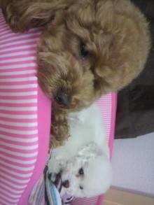 愛犬鈴ちゃん~トイプードル☆ライフスタイル~-2011060921050001.jpg
