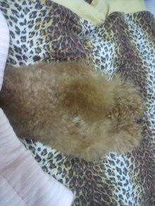 愛犬鈴ちゃん~トイプードル☆ライフスタイル~-2011061500430001.jpg