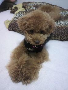 愛犬鈴ちゃん~トイプードル☆ライフスタイル~-2011061500440000.jpg
