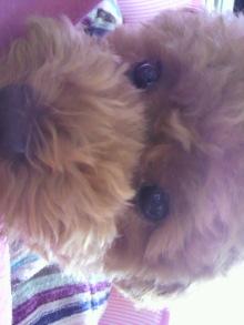 愛犬鈴ちゃん~トイプードル☆ライフスタイル~-2011061512490002.jpg