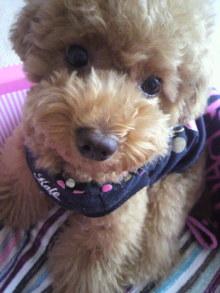 愛犬鈴ちゃん~トイプードル☆ライフスタイル~-2011061512490001.jpg