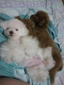 愛犬鈴ちゃん~トイプードル☆ライフスタイル~-2011061623490000.jpg