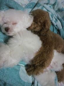 愛犬鈴ちゃん~トイプードル☆ライフスタイル~-2011061623490001.jpg