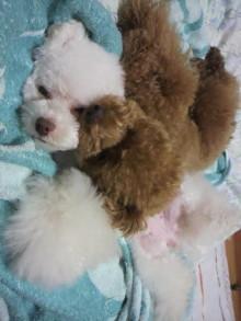 愛犬鈴ちゃん~トイプードル☆ライフスタイル~-2011061623510003.jpg