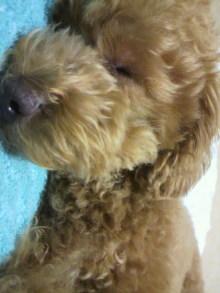 愛犬鈴ちゃん~トイプードル☆ライフスタイル~-2011061623530002.jpg