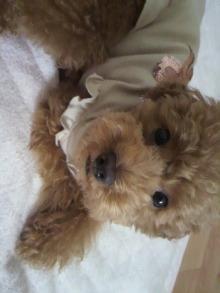 愛犬鈴ちゃん~トイプードル☆ライフスタイル~-2011061809160001.jpg