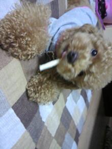 愛犬鈴ちゃん~トイプードル☆ライフスタイル~-2011061818160001.jpg