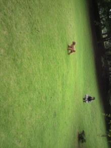 愛犬鈴ちゃん~トイプードル☆ライフスタイル~-2011061910570000.jpg