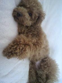 愛犬鈴ちゃん~トイプードル☆ライフスタイル~-2011061914590000.jpg
