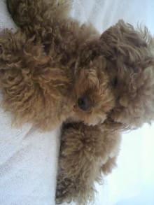 愛犬鈴ちゃん~トイプードル☆ライフスタイル~-2011061915010000.jpg