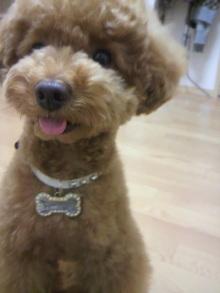 愛犬鈴ちゃん~トイプードル☆ライフスタイル~-2011062118430002.jpg