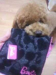 愛犬鈴ちゃん~トイプードル☆ライフスタイル~-2011062122070000.jpg