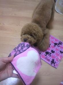 愛犬鈴ちゃん~トイプードル☆ライフスタイル~-2011062122070001.jpg