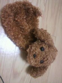愛犬鈴ちゃん~トイプードル☆ライフスタイル~-2011062122140000.jpg