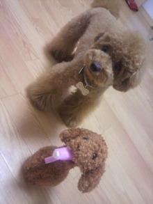 愛犬鈴ちゃん~トイプードル☆ライフスタイル~-2011062122130001.jpg