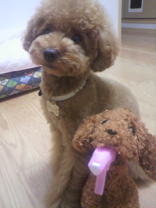 愛犬鈴ちゃん~トイプードル☆ライフスタイル~-2011062122170000.jpg