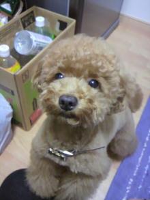 愛犬鈴ちゃん~トイプードル☆ライフスタイル~-2011062119180000.jpg