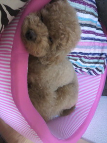 愛犬鈴ちゃん~トイプードル☆ライフスタイル~-2011062209580001.jpg