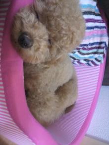 愛犬鈴ちゃん~トイプードル☆ライフスタイル~-2011062209570000.jpg