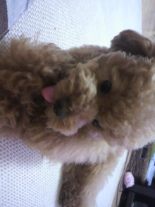 愛犬鈴ちゃん~トイプードル☆ライフスタイル~-2011062209140000.jpg