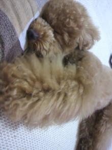 愛犬鈴ちゃん~トイプードル☆ライフスタイル~-2011062209130000.jpg
