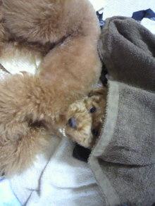 愛犬鈴ちゃん~トイプードル☆ライフスタイル~-2011062217560001.jpg