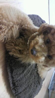 愛犬鈴ちゃん~トイプードル☆ライフスタイル~-2011062513000000.jpg