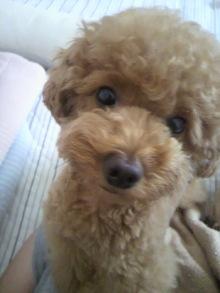 愛犬鈴ちゃん~トイプードル☆ライフスタイル~-2011062609530001.jpg