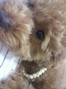 愛犬鈴ちゃん~トイプードル☆ライフスタイル~-2011062619480001.jpg