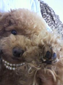愛犬鈴ちゃん~トイプードル☆ライフスタイル~-2011062716050000.jpg