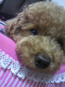 愛犬鈴ちゃん~トイプードル☆ライフスタイル~-2011062714560001.jpg