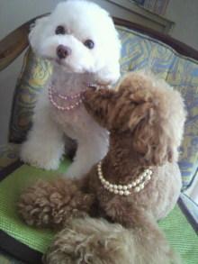 愛犬鈴ちゃん~トイプードル☆ライフスタイル~-2011070117420000.jpg